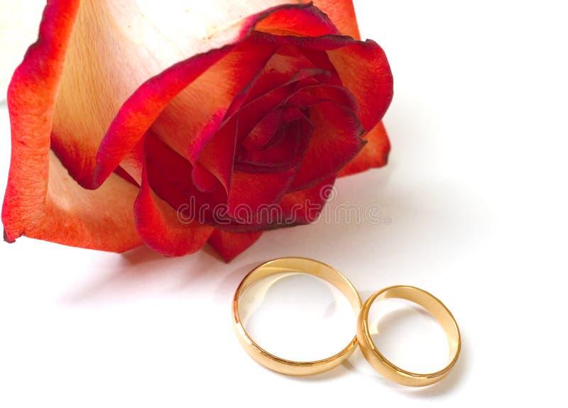 Anelli di cerimonia nuziale e della Rosa fotografie stock