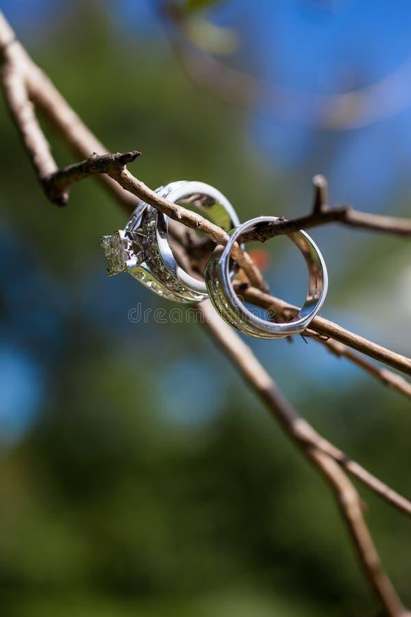 Anelli di cerimonia nuziale sulla filiale di albero fotografia stock