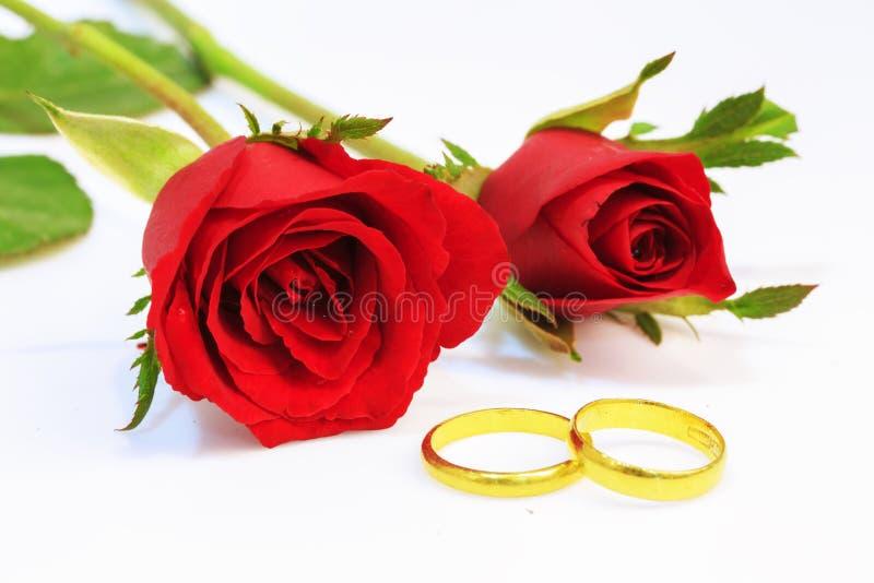 Anelli rossi di cerimonia nuziale e della Rosa fotografia stock libera da diritti