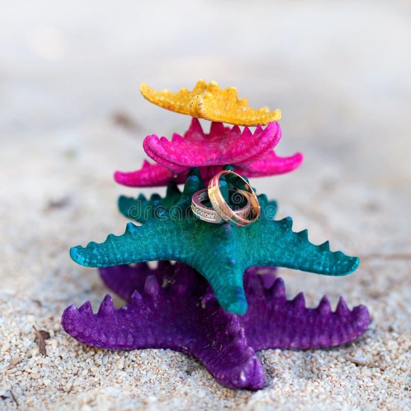 Anelli sulle stelle marine nel paradiso tropicale Concetto di vacanza di nozze fotografie stock libere da diritti
