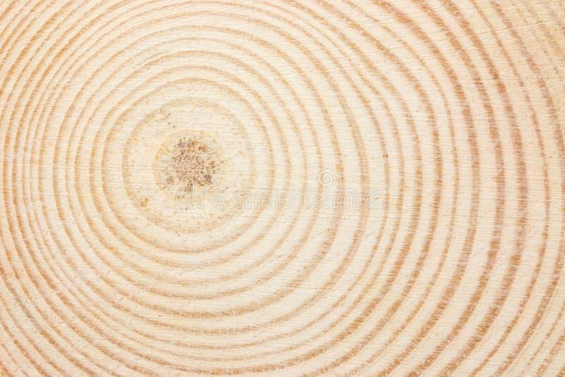 Anello di legno immagine stock libera da diritti