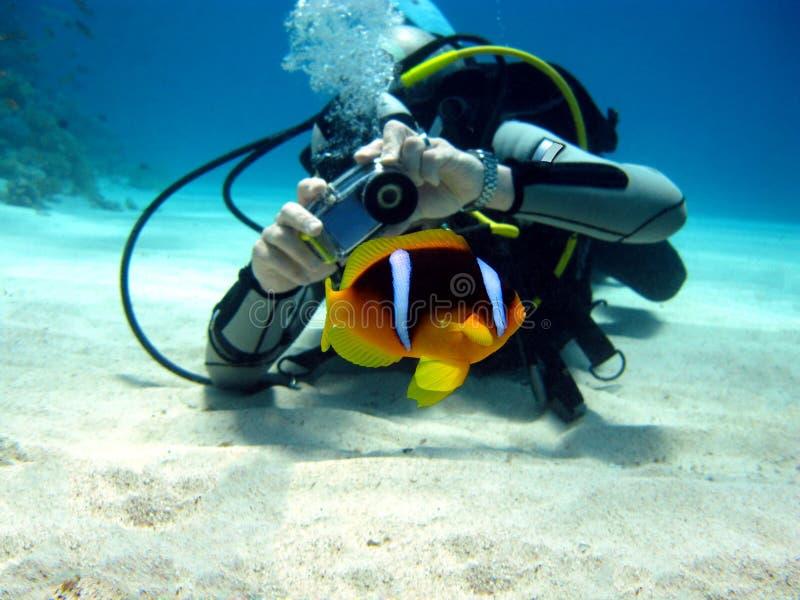 anemon潜水员鱼摄影师 免版税库存照片