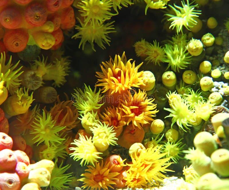 anemon royaltyfri foto