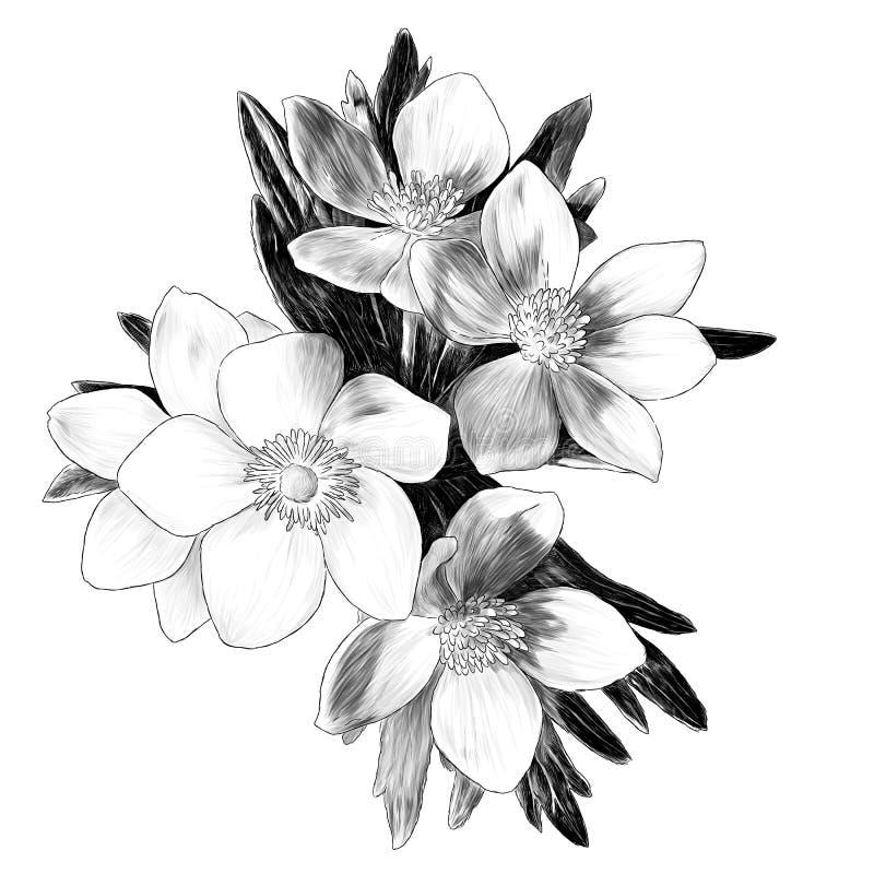Anemone λουλουδιών με τον κλάδο ανθοδεσμών φύλλων ελεύθερη απεικόνιση δικαιώματος