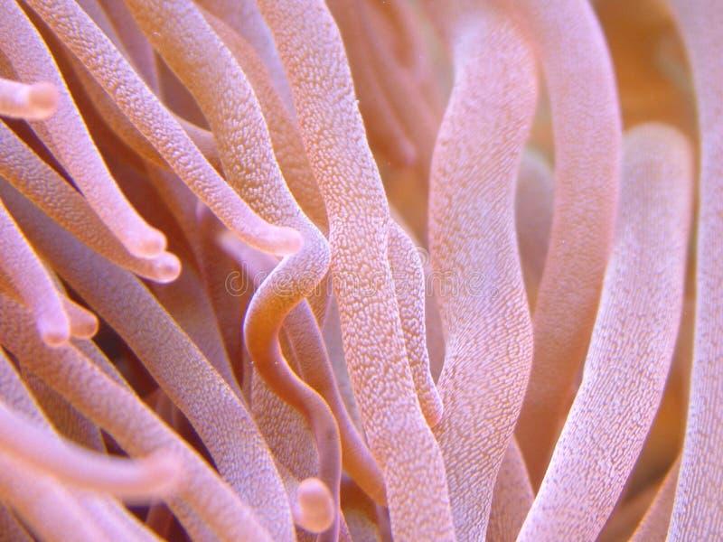 Anemone stockfotos