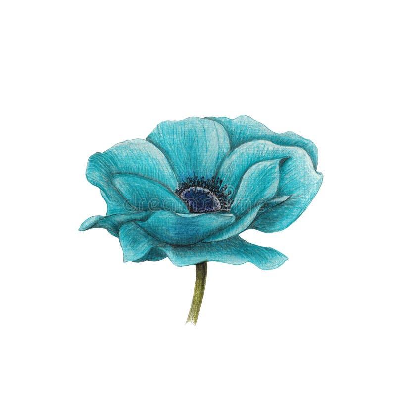 Anemone azul ilustração do vetor