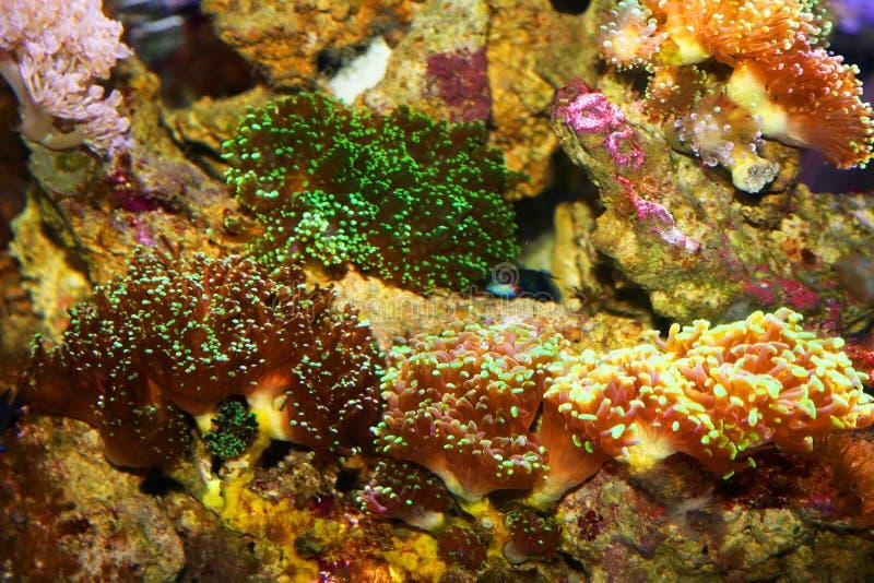 Anemone de mar fotos de stock