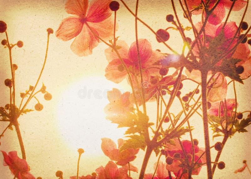 Anemone do chinês do vintage ilustração stock