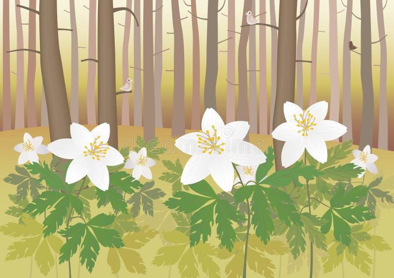 Anemone em uma floresta ilustração do vetor