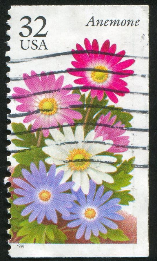 anemone ilustração royalty free