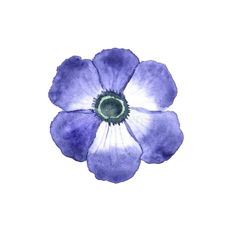 Anemone Flower vector illustratie