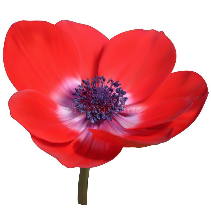 Anemone Flower vermelha ilustração royalty free