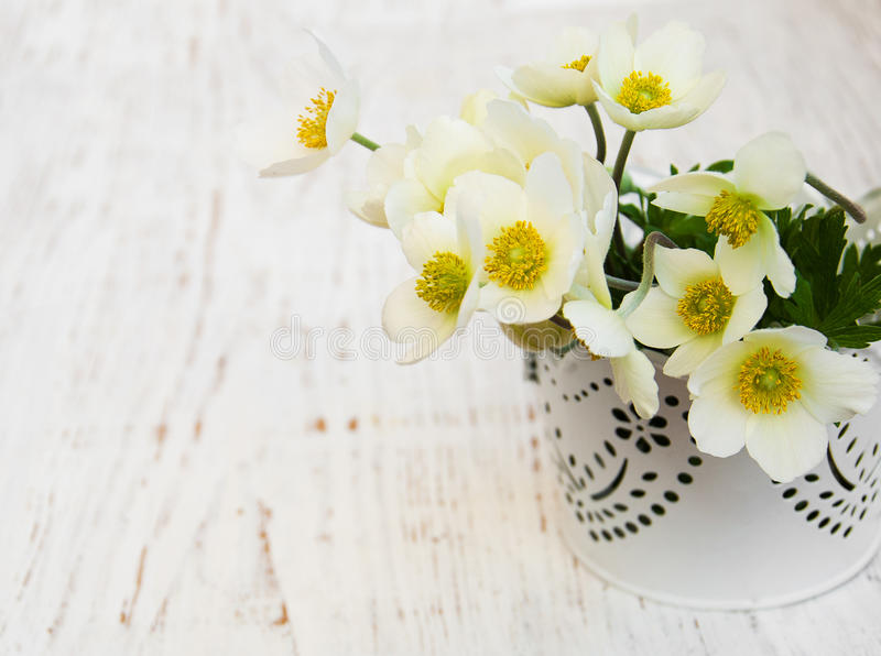 Anemone flowers. Metal pot with Anemone flowers on a wooden background royalty free stock image