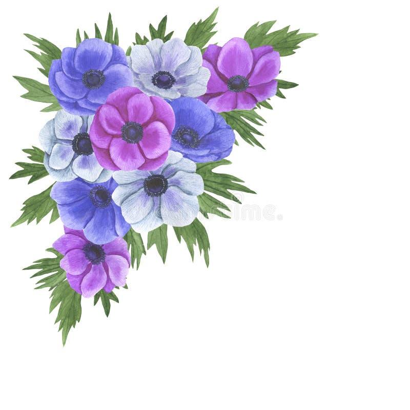 Anemone flowers watercolor illustration set of summer botanical decorations design wedding invitations greeting cards. Illustration Anemone flowers watercolor royalty free illustration