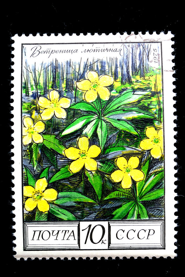 Anemone ranunculoides stockbilder