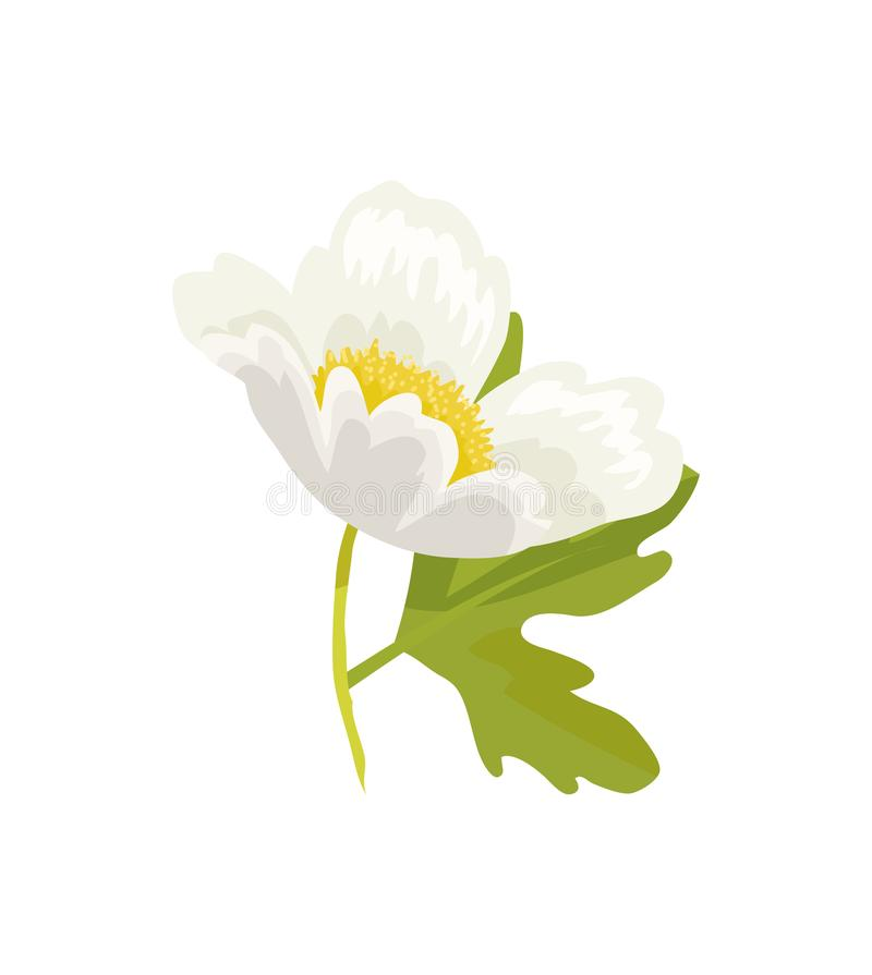 Anemone Snowdrop Favorite Garden Plant-Vector stock illustratie