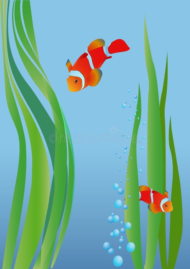 Anemonefish stock illustratie