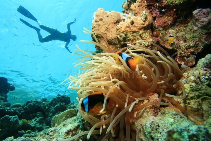 Anemonefish e Snorkeller fotografie stock libere da diritti