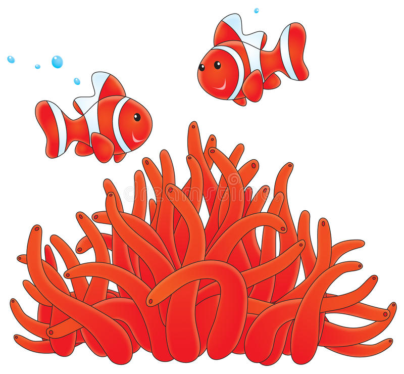 Anemonefishes en actinia vector illustratie