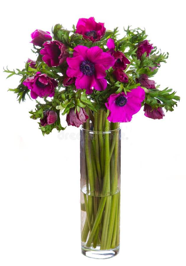 Anemonen blommar den isolerade buketten fotografering för bildbyråer