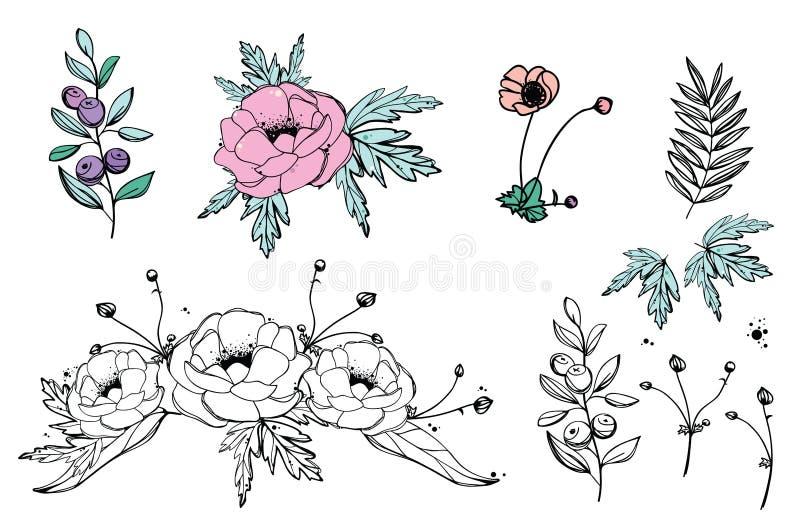 Anemoner blommar, blåbärvektorillustrationen, den blom- modellen, den drog handen stock illustrationer