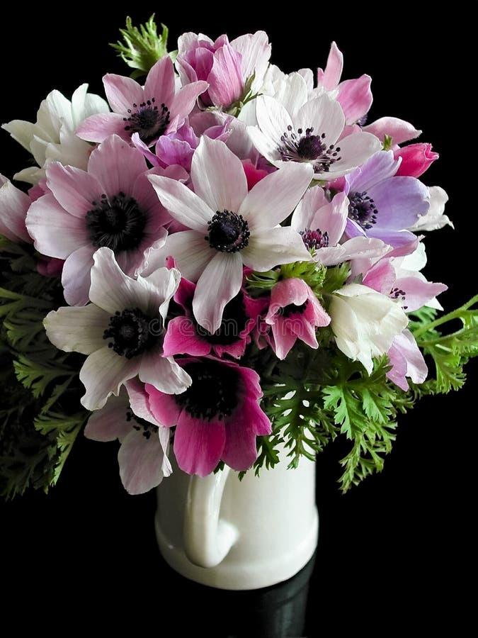 Download Anemones stock image. Image of tenderness, magenta, anemones - 14067281