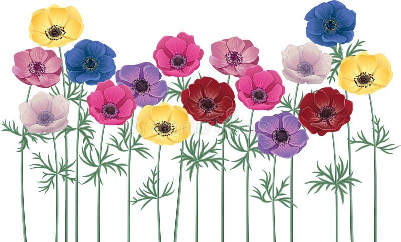 Anemones stock illustration