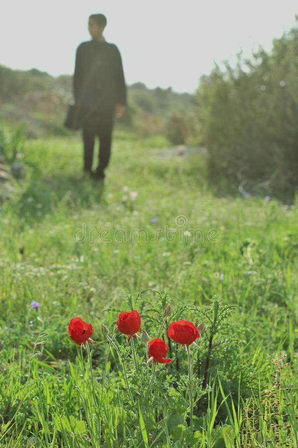 Anemones in a field. And a boy in the background royalty free stock photography
