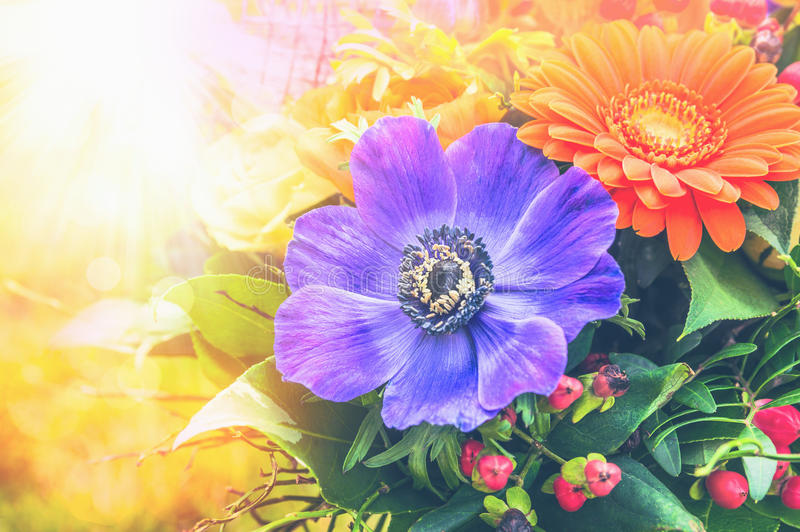 Anemones and gerbera in sunny flowers bunch stock photography