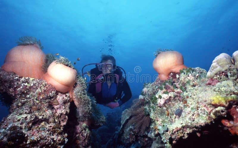 anemonfält royaltyfri fotografi