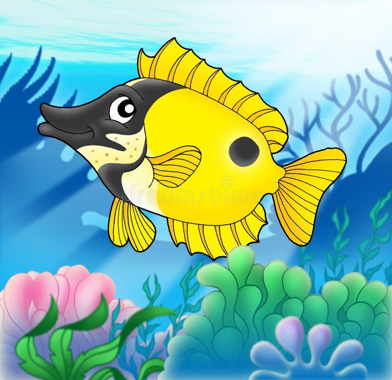 anemonfoxfish royaltyfria bilder