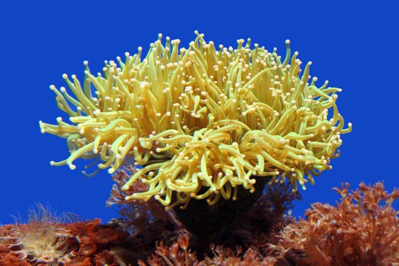 anemonhav