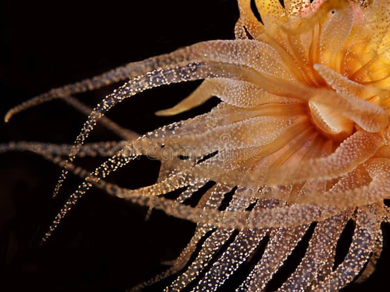 anemonhavsyellow arkivbilder