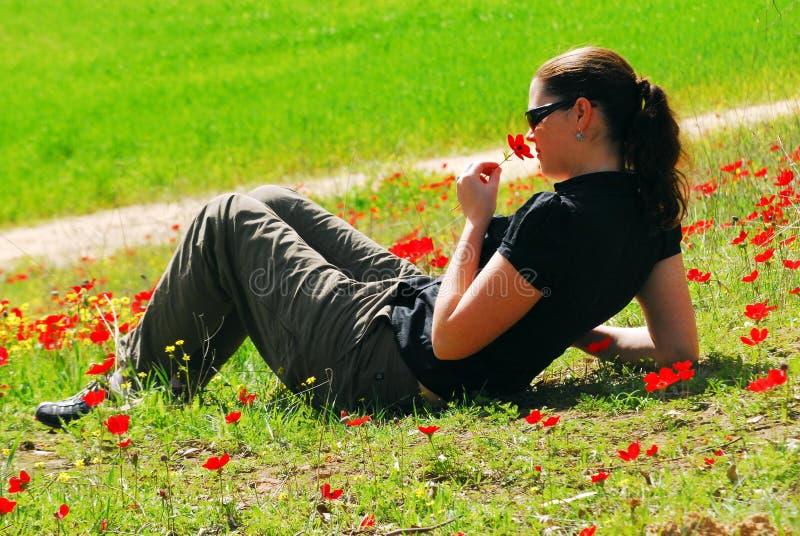 Anemonowy Czerwony kwiatu Kwitnąć fotografia royalty free