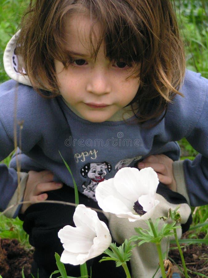 anemonwhite arkivfoto