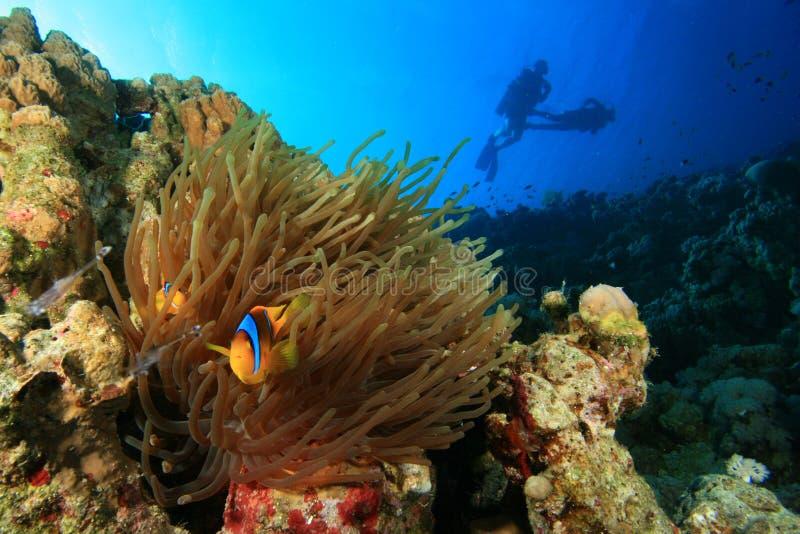 Anemoon en Clownfish en Scuba-duikers stock fotografie