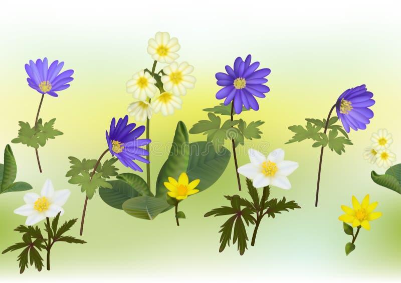 Anemoon, Primula, de Kop bloeiende installaties van de Koning met veelkleurige mechachtergrond royalty-vrije illustratie