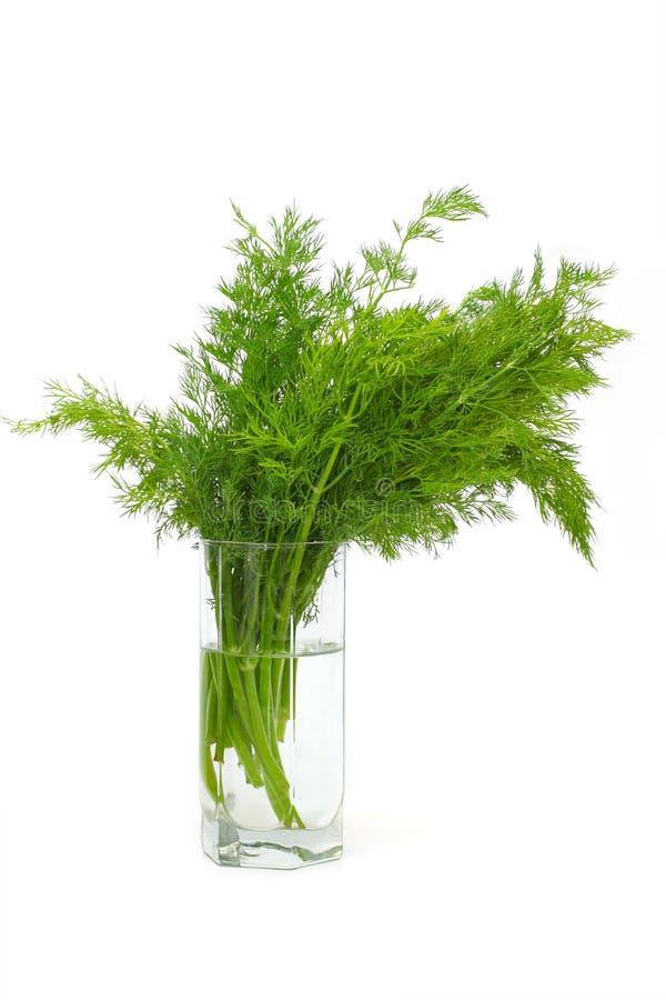 Aneto fresco (erva) no branco em um vidro de água. foto de stock