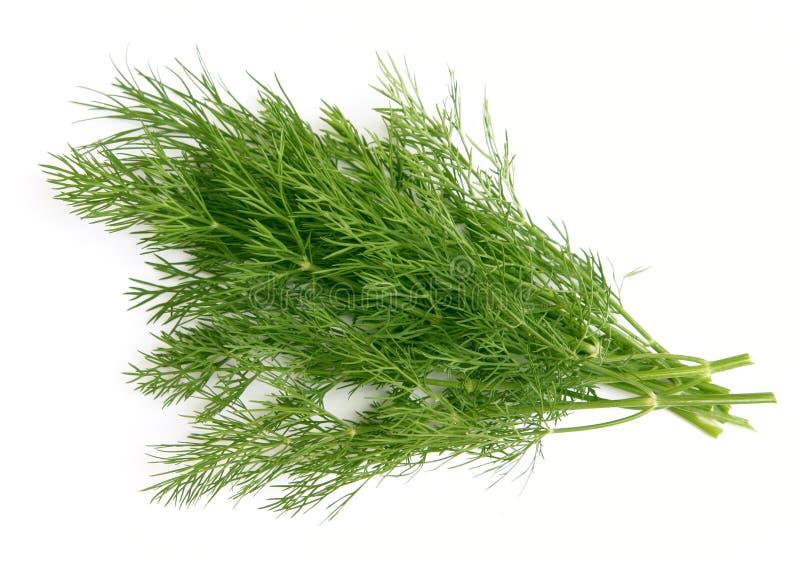 Aneto verde imagens de stock