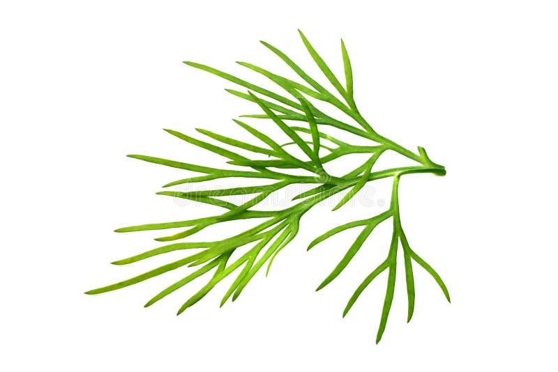 Aneto verde fresco isolado no fundo branco Macro foto de stock