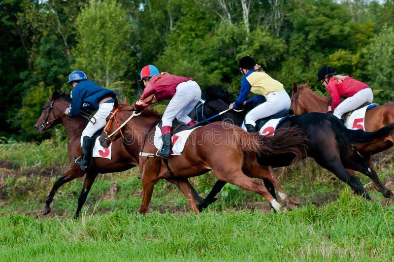 Anfang der laufenden Pferde, die ein Rennen beginnen lizenzfreie stockfotografie