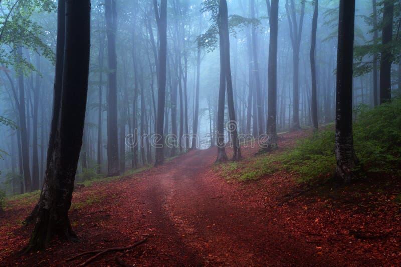 Anfang des Herbstes in einem nebeligen Wald lizenzfreie stockfotos