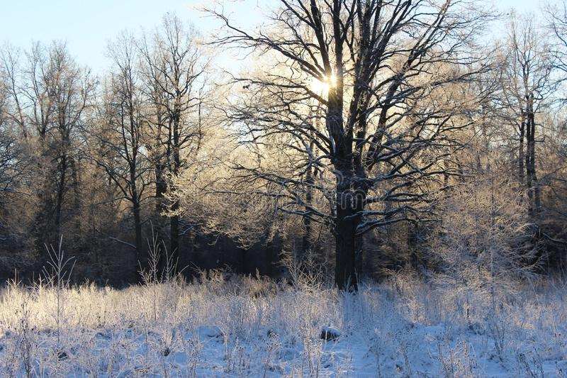 Anfang des Winters lizenzfreies stockfoto