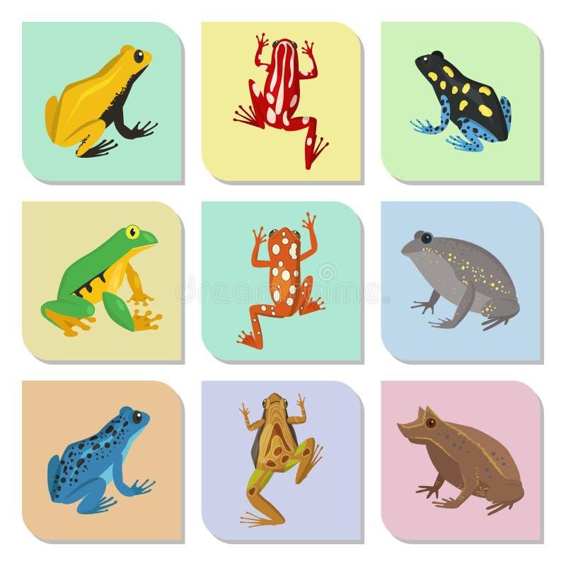 Anfibio tossico del rospo della fauna selvatica del fumetto di vettore della rana del froggy dell'illustrazione divertente verde  illustrazione vettoriale