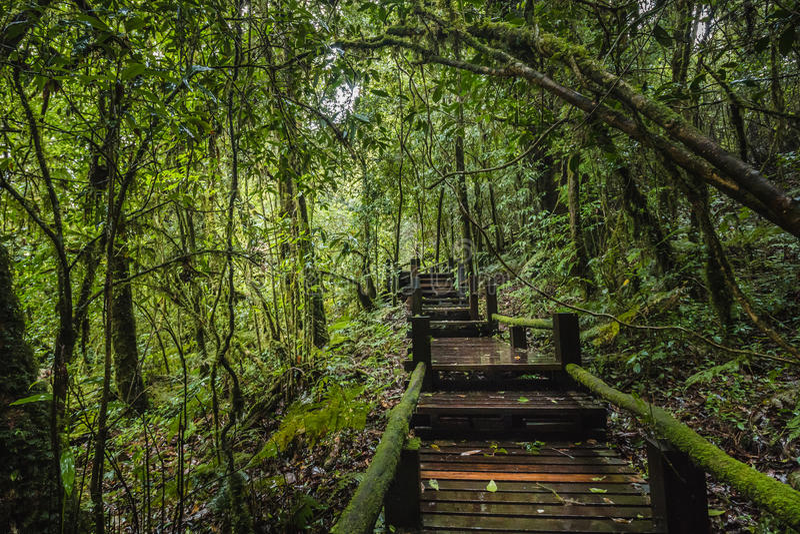 Ang钾自然痕迹的森林在土井Inthanon 免版税库存照片
