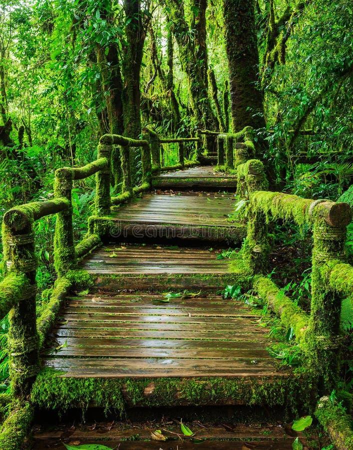 ang钾自然痕迹的美丽的雨林 库存图片