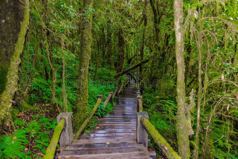 Ang Ka Luang Nature Trail immagine stock