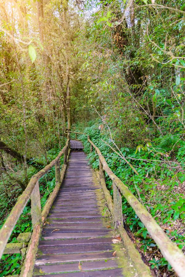 Ang Ka Luang Nature Trail fotografia stock libera da diritti