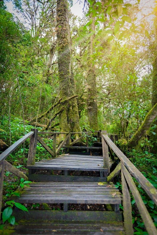 Ang Ka Luang Nature Trail immagini stock libere da diritti