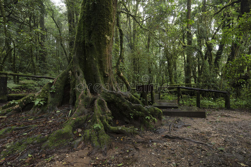 Ang Ka Luang Nature Trail al parco nazionale di Doi Inthanon, Chiang fotografia stock libera da diritti